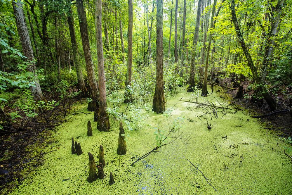 Everglades-1