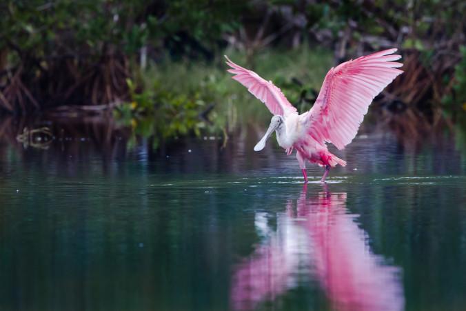 Everglades2-11-676x451