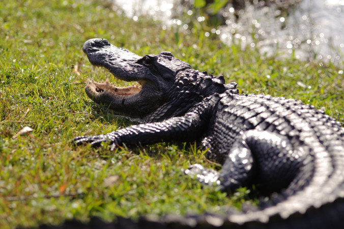 Everglades4-676x450